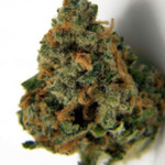 Cannabis Strains Blue Dream
